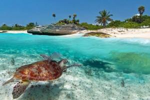 Een zeeschildpad in Mexico