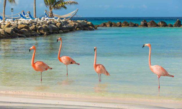 Last minute tropisch Aruba | 9 dagen januari 2018 €528,- per persoon