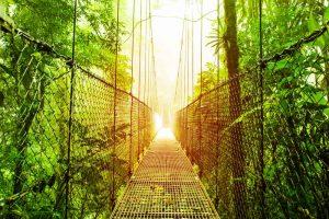 De jungle van Costa Rica
