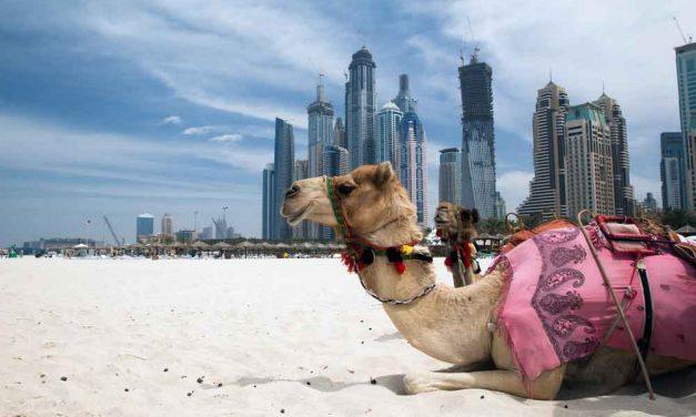 Luxe halfpension Dubai aanbieding | last minute €553,- per persoon