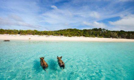 Retour naar de Bahama's voor €573,- p.p. | vliegtickets aanbieding