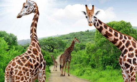 FOX Zuid-Afrika | privé reizen & meer | rondreizen top 3