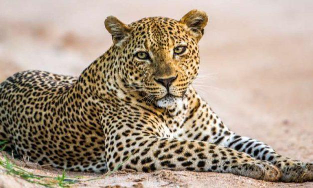 15-daagse rondreis door Zuid-Afrika | €1899,- incl. KLM vluchten