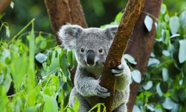 15-daagse camperreis Australie | incl. vluchten €882,- per persoon