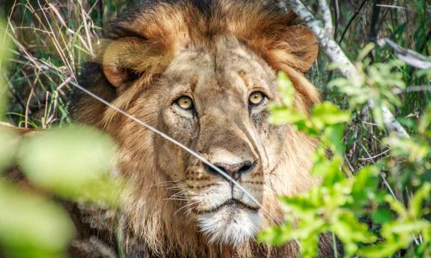 18-daagse rondreis Zuid-Afrika | oktober 2017 €1667,- p.p.