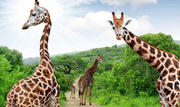 16 dagen naar Zuid-Afrika | KLM vlucht + hotel + ontbijt! YES