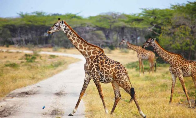 Rondreis Zanzibar & Africa Safari | 9 dagen €1750,- per persoon