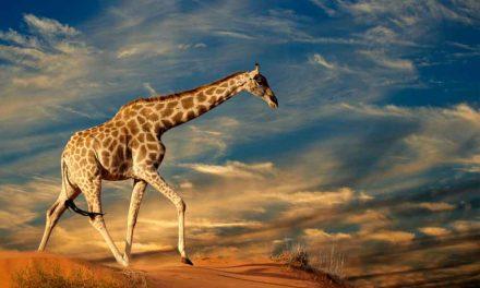 16-daagse rondreis Zuid-Afrika aanbieding | mei 2017 €1379,- p.p.