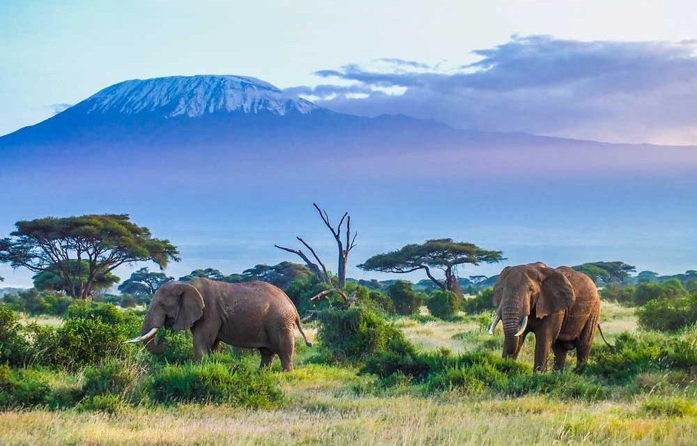 Unieke reis Zuid-Afrika & Mauritius | 19 dagen incl. veel €1999,- p.p.