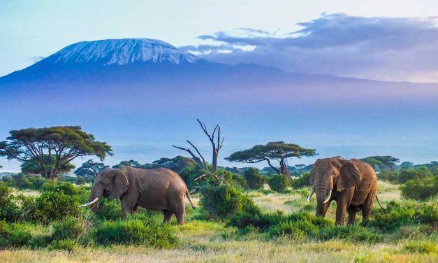 Bucketlist deal: 4* rondreis Kenia | safari & luxe strand | april 2018