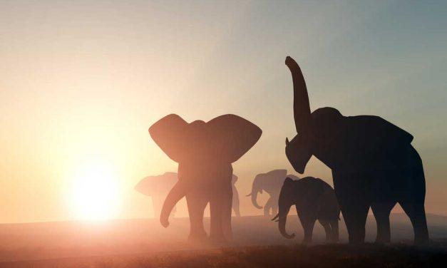 Skitterende Rondreis Zuid-Afrika | 16 dagen januari 2018 €1249,- p.p.