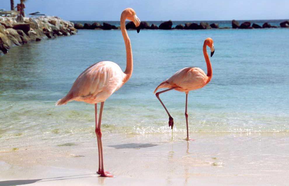 Super last minute naar Aruba! | 9 dagen voor maar €499,- p.p.