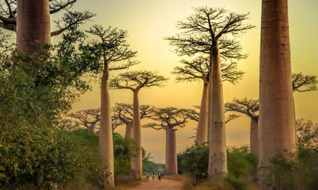 Bucketlist trip Madagaskar   23 dagen juni 2018 €2998,- p.p.