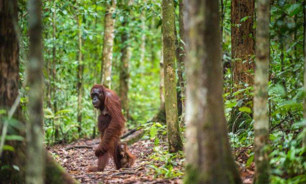Wow! Reis een maand lang door Sumatra, Bali & Java | vlucht & meer