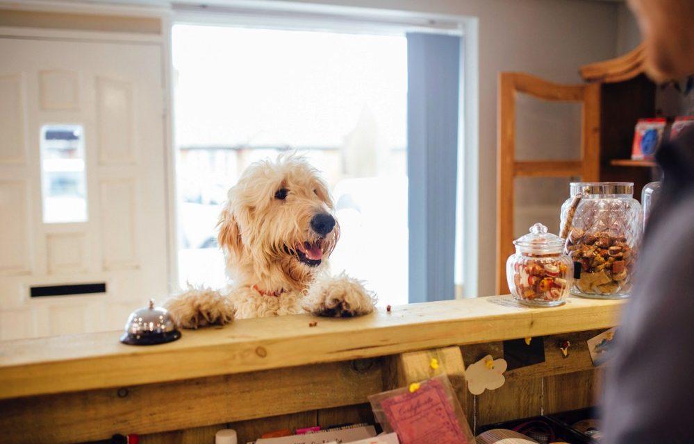 Hotel met hond aan zee | 10 hondvriendelijke hotels Nederland