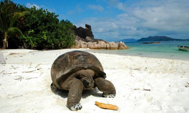 4* Seychellen aanbieding | 10 dagen incl. ontbijt €1132,- per persoon