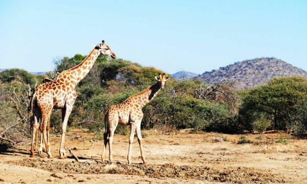 Retour Johannesburg maar €421,- p.p. | goedkoop naar Zuid-Afrika