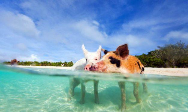 Tropische cruise West-Caribbean | 12 dagen inclusief vliegreis €1478,-