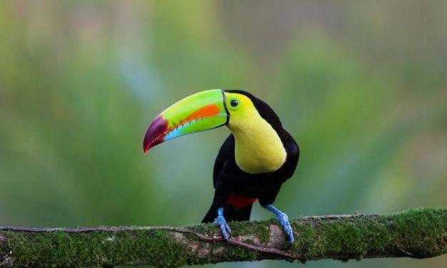 Sawadee rondreis Costa Rica   16 dagen oktober 2018 voor €1598,- p.p.