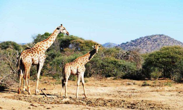 Rondreis Skitterend Zuid-Afrika | 16 dagen voor €1299,- per persoon