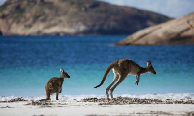 26-daagse camperreis Australie | incl. vluchten €983,- per persoon