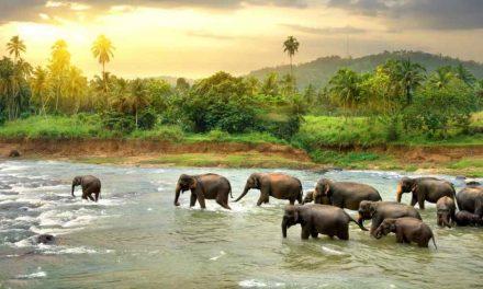 19-daagse rondreis Sri Lanka | halfpension €1139,- per persoon