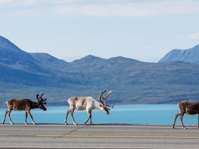 Fly & Drive rondreis Lapland | incl. vluchten, huurauto & meer €959,-