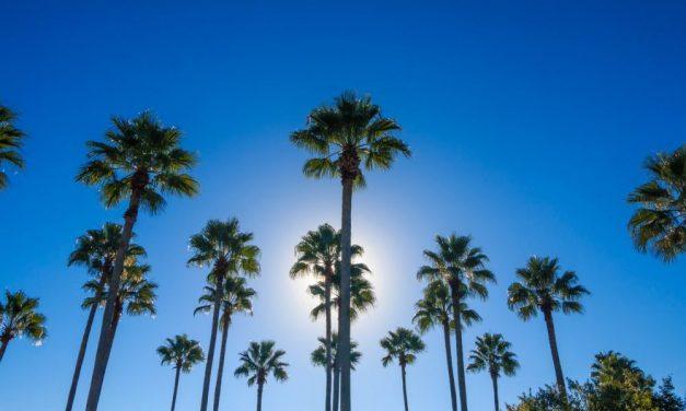 9 dagen Sunny Florida | incl. verblijf met waterpark €588,- p.p.