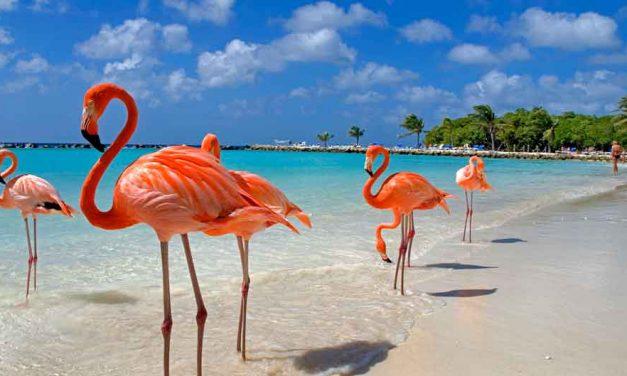 Your next stop: Sunny Aruba | super last minute 9 dagen €572,-