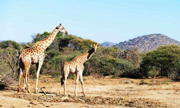 9 dagen Zuid-Afrika | KLM vluchten, transfers & verblijf + ontbijt