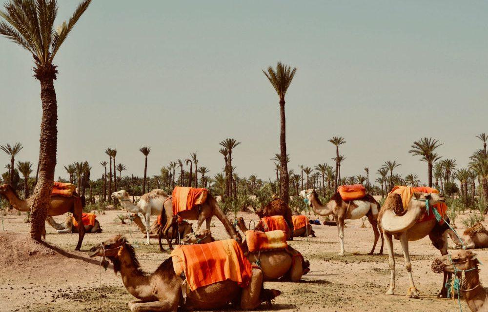 Ontdek koningsstad Marrakech   incl. 4* hotel + ontbijt €265,- p.p.