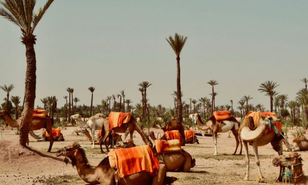 Ontdek koningsstad Marrakech | incl. 4* hotel + ontbijt €265,- p.p.