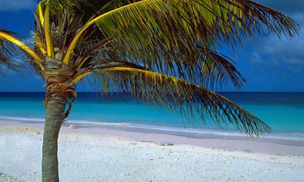 9-daagse droomvakantie @ Bonaire | last minute kerstvakantie deal