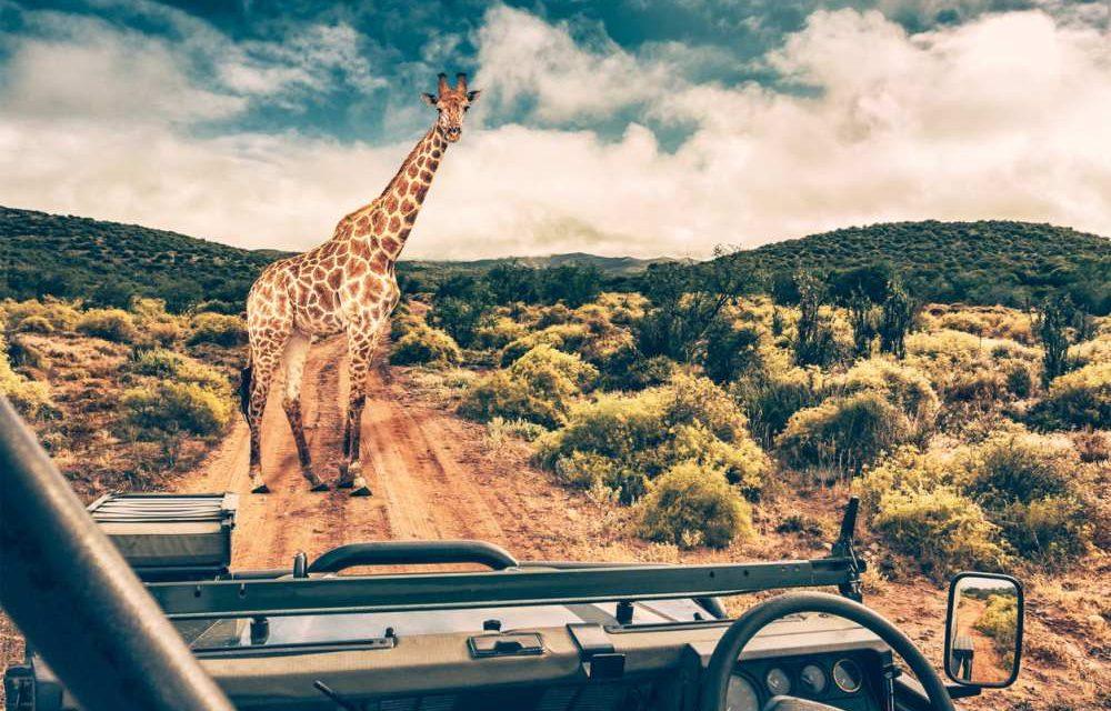 Kras dagdeal: rondreis Zuid-Afrika | 17 dagen incl. veel €2129,- p.p.