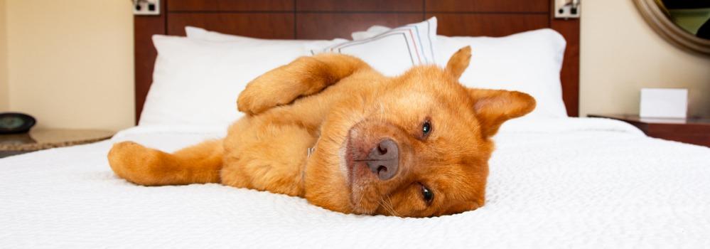 hotel met hond