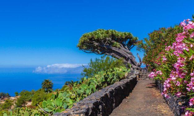 Let's go to La Palma | 8 dagen genieten incl. huurauto voor €385,-