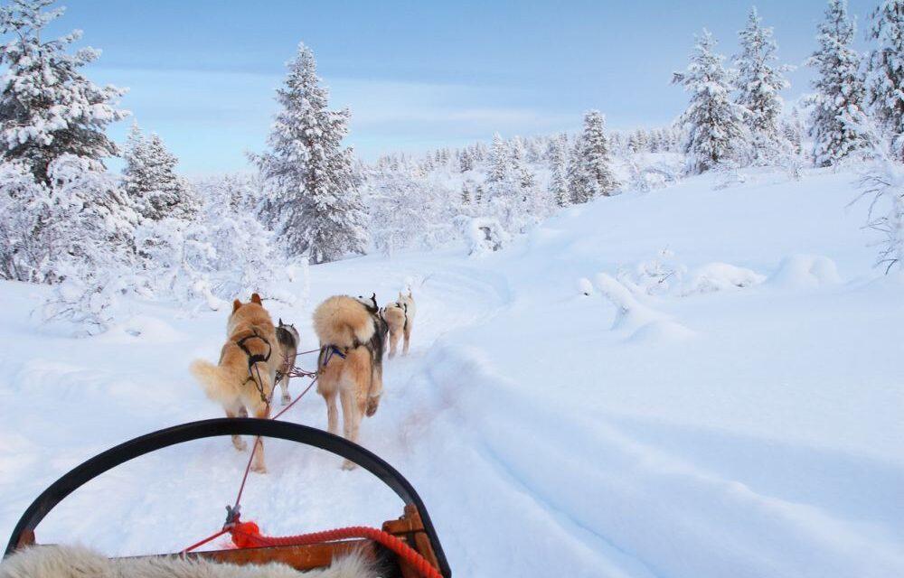 Bucketlist: magisch Lapland | Incl. 3 excursies, halfpension & veel meer…