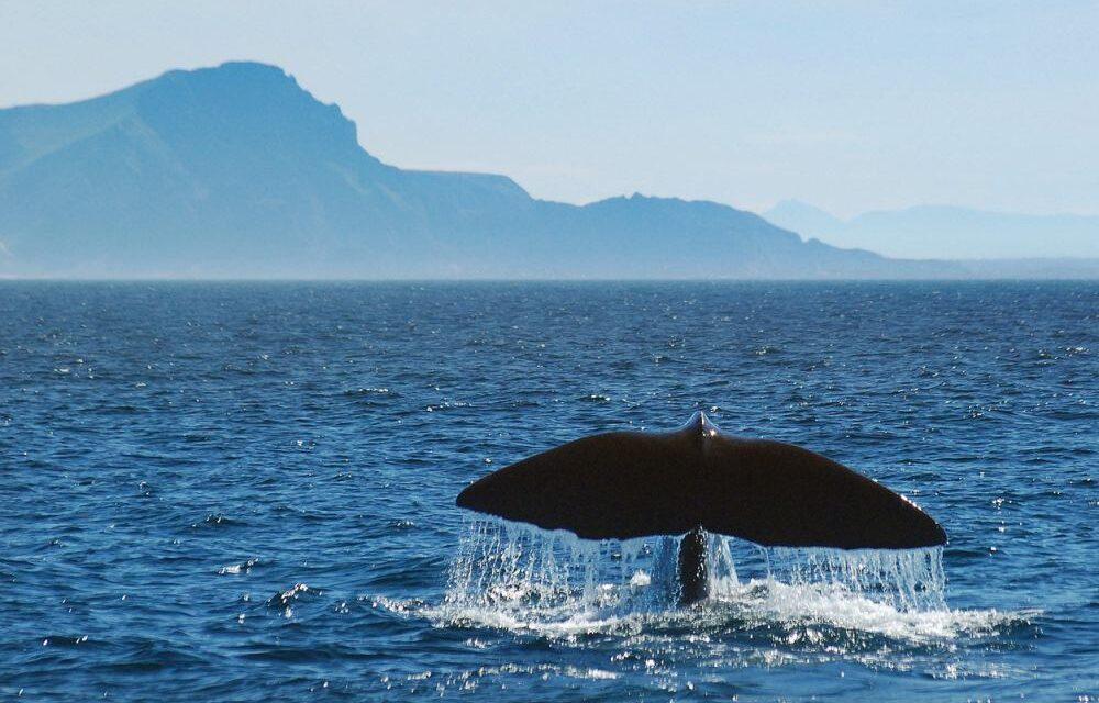 Noorderlicht & walvissen in Tromsø Noorwegen | Retour €143,- p.p.