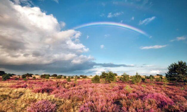 Pinksterweekend deal | Natuurhuisje in Drenthe met eigen sauna €84,- p.n.
