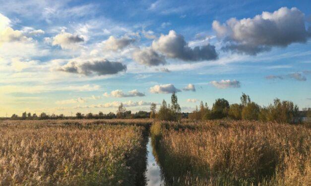 Landal in Overijssel | 4-daagse zomervakantie (6 pers.) 20% korting