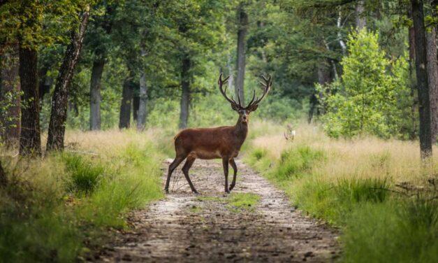 Dit zijn de 21 Nationale Parken van Nederland | Het grote overzicht