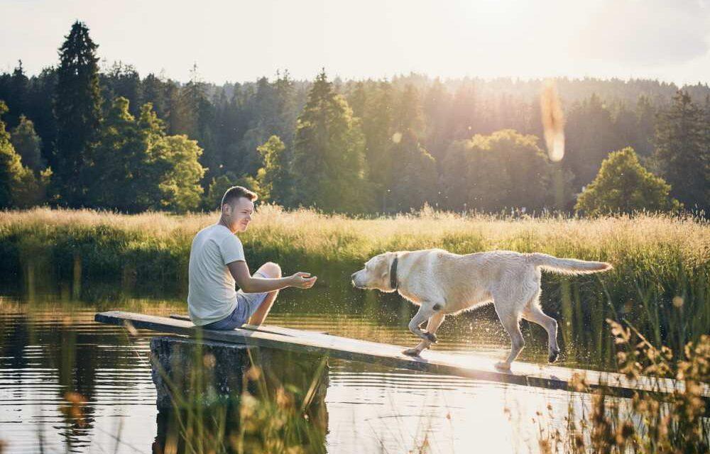 Op vakantie met je hond | Dit zijn de leukste hondvriendelijke plekken!