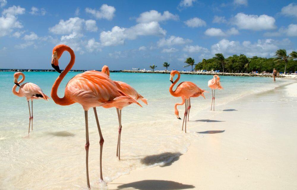Zonvakantie naar Aruba in september 2020 | Complete deal voor €696,-