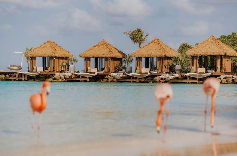 Super last minute 5* Aruba deal| Luxe @ beroemd flamingo resort