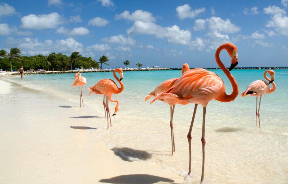 Flamingo Beach Aruba | Lees hier alles over dit fantastische strand!
