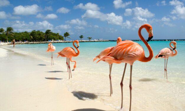 Flamingo Beach Aruba   Lees hier alles over dit fantastische strand!