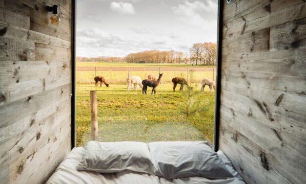 TIP! Tiny House met uitzicht op alpaca's | Nu voor slechts €196,- p.n.